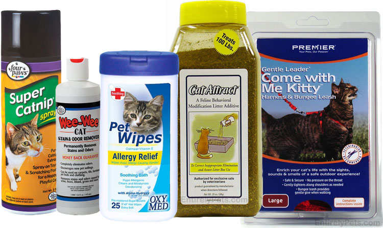 Care Supplies for Kitten
