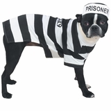 Casual Canine Prison Pooch Halloween Costume