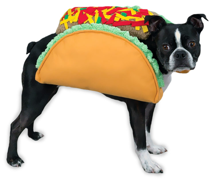 Let's All Dress Up Like Tacos For Halloween | HuffPost |Taco Dog Halloween Costume Pattern