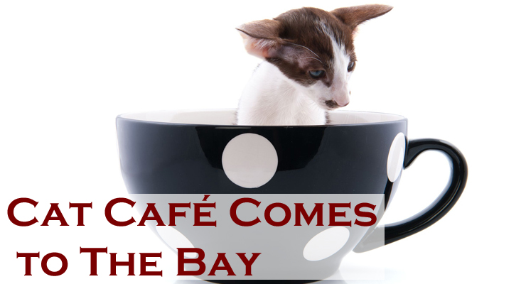 Cat Café May Soon Open in San Francisco