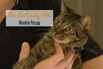 Cat Rescued By Family Returns the Favor, Rescuers Dig for a Dog, and Dying Horses Force Big Changes at Del Mar: All This and More Happened This Week- So Catch Up With The EntirelyPets Weekly Recap ( July 28 - August 1, 2014)