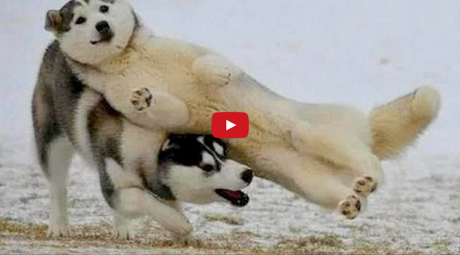 Celebrate Friday with the Top Dog Videos on the Web! These Dogs Are Absolutely Hilarious!!