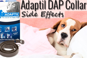 DAP Collar Side Effects