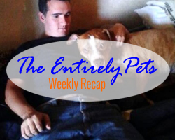 Delta Airlines Inexplicably Loses Family's Dog, DogVacay to Expand Services to Dogs Worldwide, and America's First Cat Café Opens Its Doors- This & More in the EntirelyPets Weekly Recap (November 8-14, 2014)