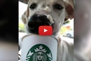 Did Someone Say Puppuccinos For Shelter Dogs?