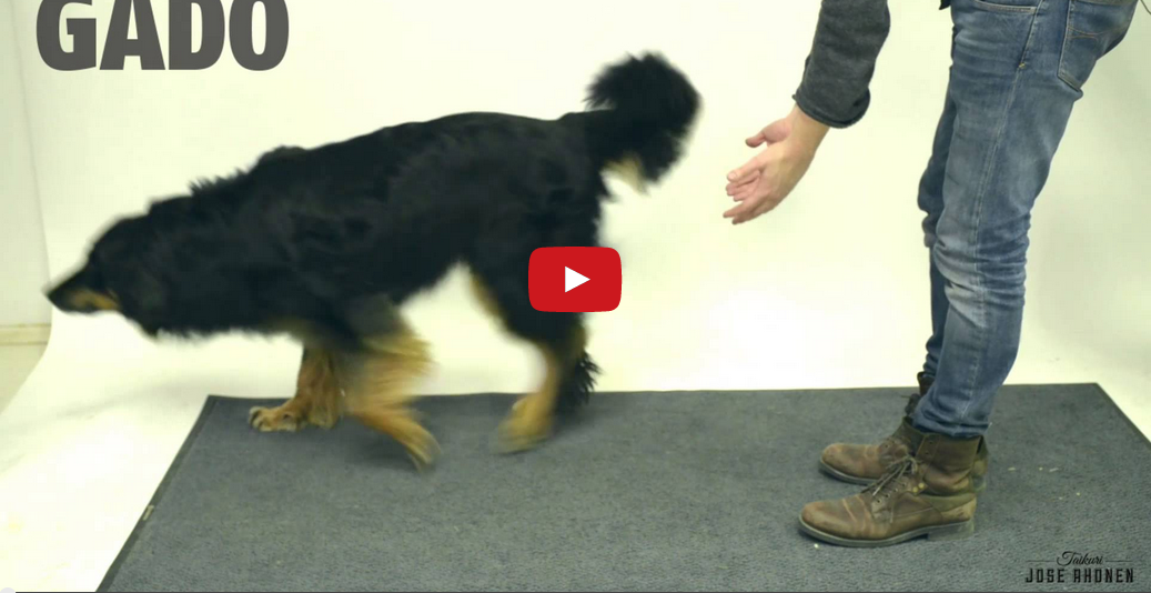 Do You Believe in Magic? These Dogs Reacting to Magic Tricks Will Make Your Day Complete!