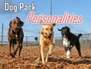 Dog Park Personalities