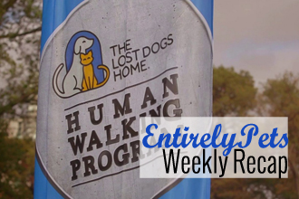 Dreams, Discrimination, Drama & More: Discover Why Dogs Dominated the News This Week with The EntirelyPets Weekly Recap (June 16-20, 2014)