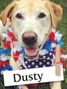 Dusty Is One Devoted Retriever You Have To Meet!