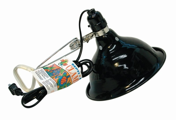 Economy Clamp Lamp 8.5""