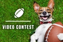 EntirelyPets It's Playtime Video Contest