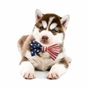 EntirelyPets Memorial Day Sale