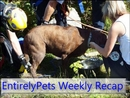 EntirelyPets Weekly Recap