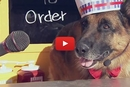 Ever Order A Hotdog From A German Shepherd?