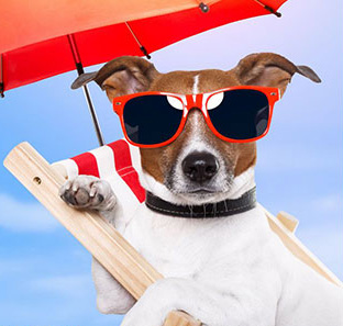 Everything Your Pet Needs For The Summer