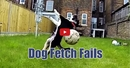 Fetch Isn't for Everyone- Watch These Dogs Fail at Fetch in This Hilarious Video!
