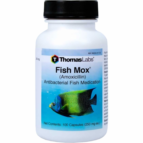 Fish mox amoxicillin 250mg 100 capsules for Fish mox for cats