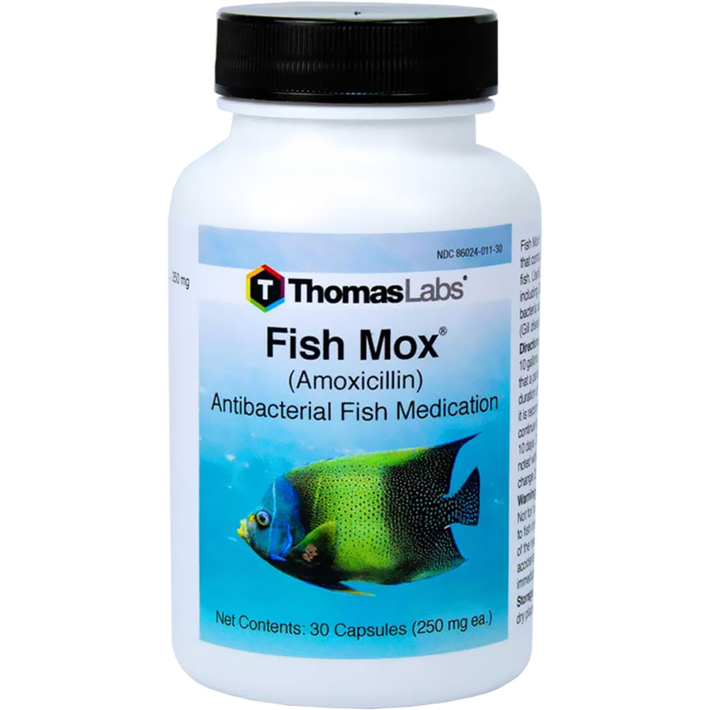 fish mox forte amoxicillin. Black Bedroom Furniture Sets. Home Design Ideas