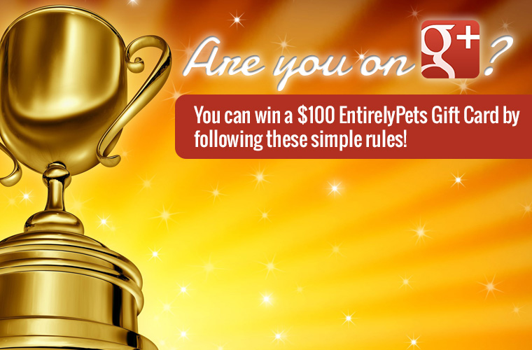 Google Plus Contest for EntirelyPets
