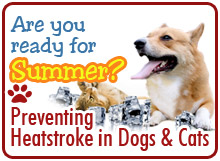 Heat Stroke in Dogs/Cats