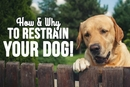 How and Why to Restrain Your Dog