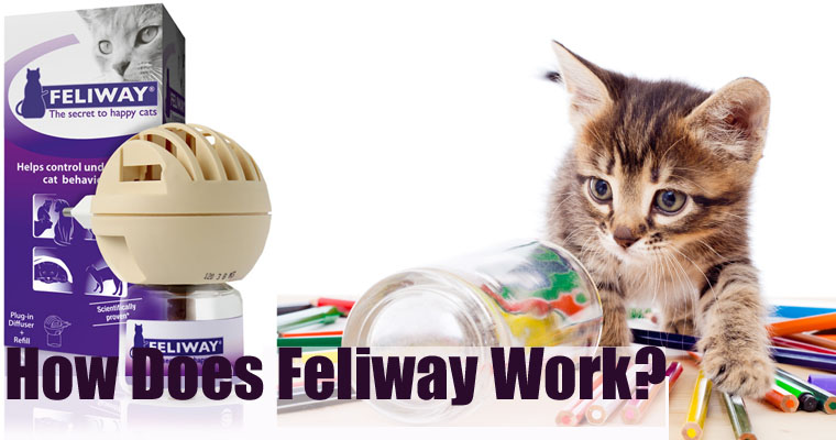 How Does Feliway Work?