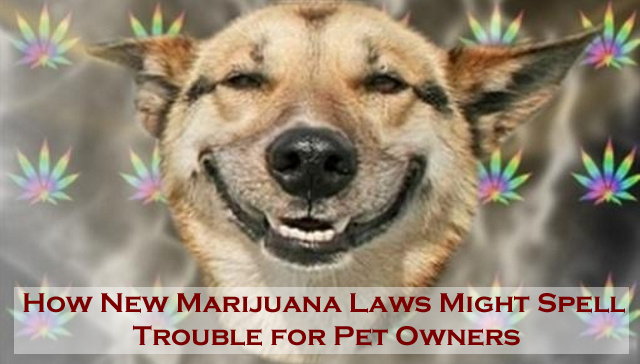 How New Marijuana Legislation Affects Pets and Owners