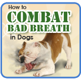 How to Combat Bad Breath in Dogs