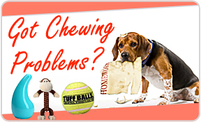 How To Deal With Chewing Problems