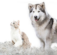 How To Deal With Pet Shedding