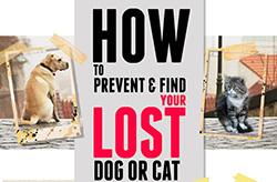 How To Prevent And Find Your Lost Dog Or Cat
