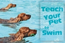 How to Teach Your Pet to Swim