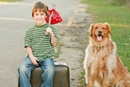 How to Travel with Pets Sensibly and Safely