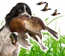 Hunting and Sporting Dog Supplies