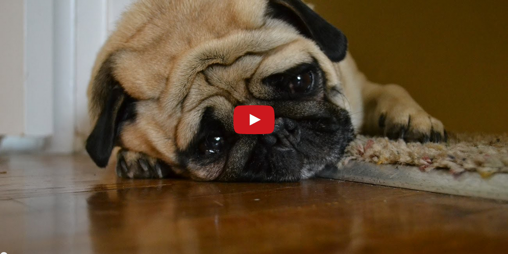 Learn What Troubles These Dogs In This Hilarious Video! My Sides Hurt from Laughing!!