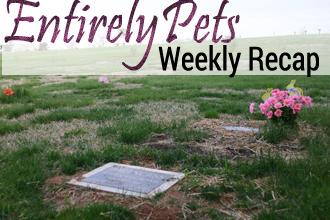Legislatures, Owners, and Organizations Each Take Questionable Action: See What Everyone in the World of Pets was Up to This Week with The EntirelyPets Weekly Recap ( June 23-27, 2014)