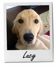 Lucy 5/14/14