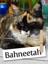Meet Bahneetah: The Brave Survivor Kitty