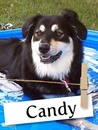 Meet Candy: The Amazing Rescue Dog Who Helped Her Owner Through Cancer