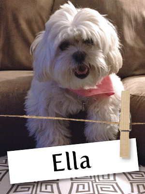 Meet Ella: The Talented Teddy Bear!