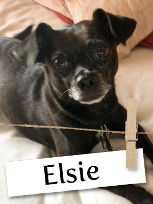 Meet Elsie: A Rescue Dog Who Was Miraculously Saved