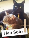 Meet Han Solo, The Cat Who Chose His Humans