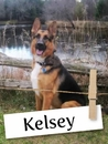 Meet Kelsey: A Gentle German Shepherd Who Loves Her Human Brother