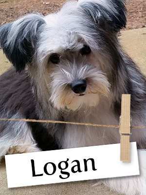 Meet Logan, The Super Hero In Disguise!