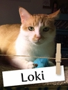Meet Loki: The Adorable Shelter Cat Who Stole His Owner's Heart