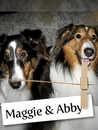 Meet Maggie & Abby: Two Shelties Who Bring Great Joy To All