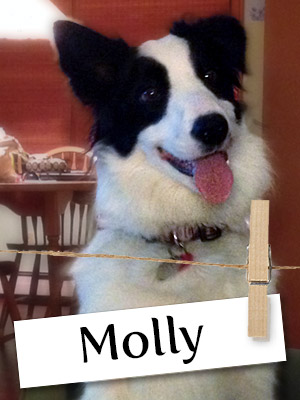 Meet Molly, The Cunning And Curious Collie!