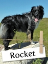 Meet Rocket: The Famous Adventure Dog