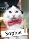 Meet Sophie: The Energetic Rescue Kitty Who Found Her Forever Home