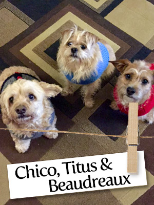 Meet The Furry Trio: Chico, Titus, Beaudreaux!
